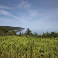 Bay of Fundy Coastline   Guy Wilkinson