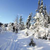 Enjoy the serenity of winter in Algonquin Provincial Park