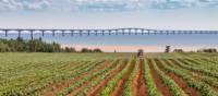 Vue du pont de la Confédération à l'Île-du-Prince-Édouard | Tourism PEI/Stclair Macaulay